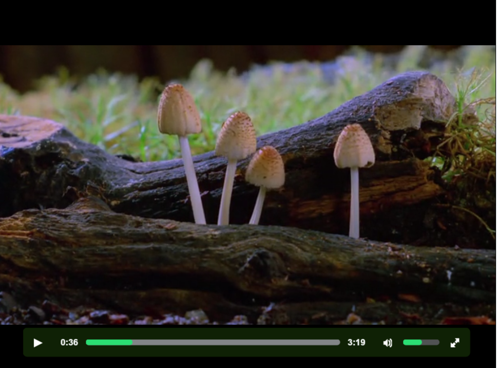 Fantastic Fungi video