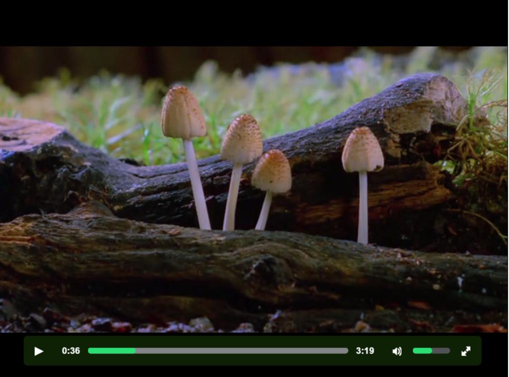 Fantastic Fungi video