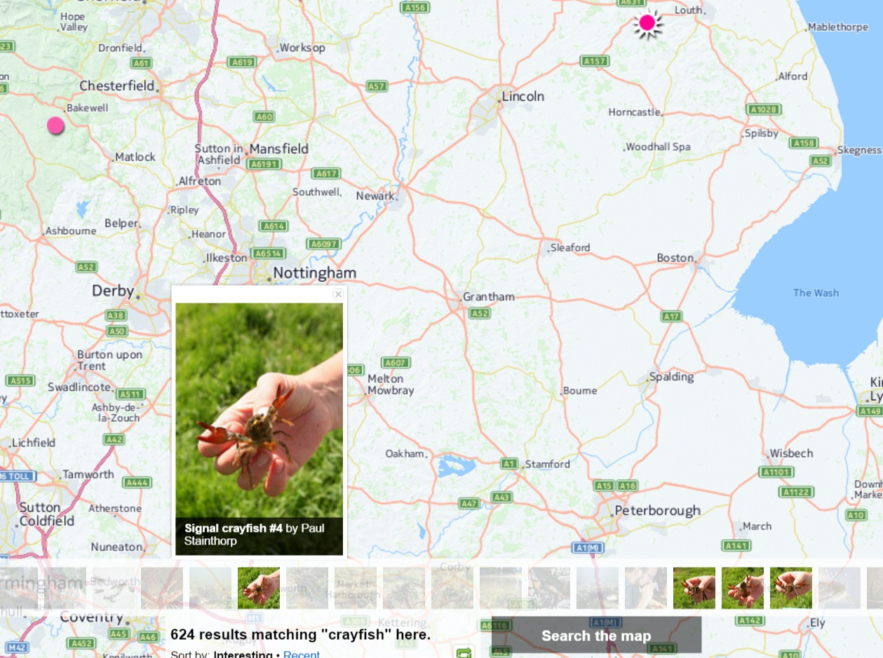 Crayfish Uk Map How to Catch Signal Crayfish in the UK