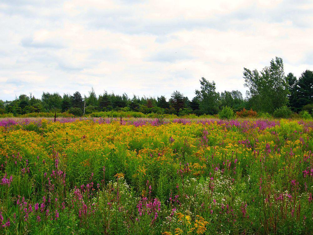 Amber's Wild Garden in Ottawa